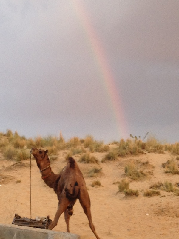Camel and Rainbow